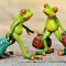 frogs-897387_1280